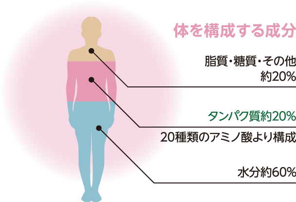 体を構成する成分